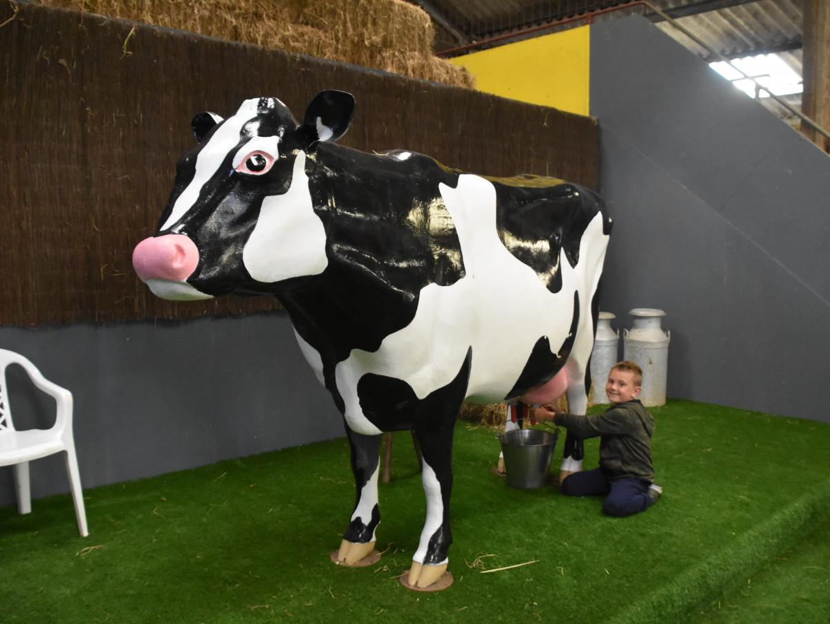 Clarabelle Milking